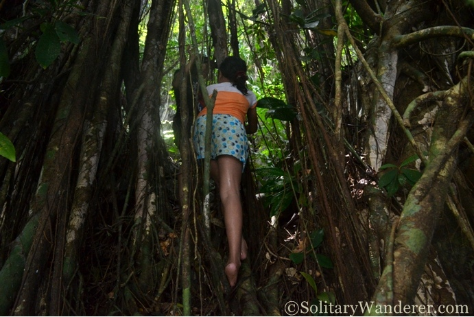 Balete roots