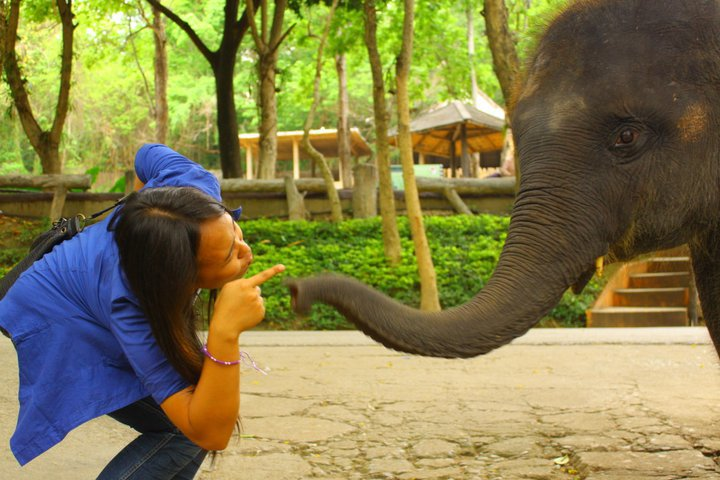 Maetang Elephant Camp, Thailand