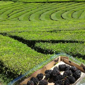 The Ranca Bali Tea Plantation is picturesque in itself buthellip