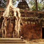 Snapshot Sunday—Child in Ta Prohm Temple, Siem Reap, Cambodia