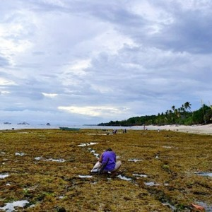 Low tide on Siquijor Island means a chance for locals…