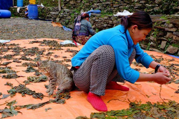 nepalese woman