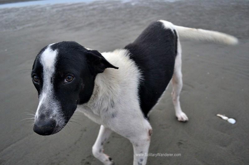 Hesitant dog at Baybay Beach.
