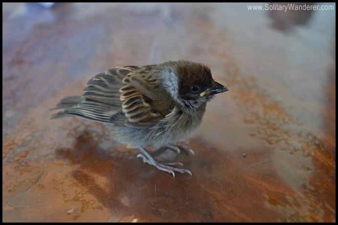 bird batanes
