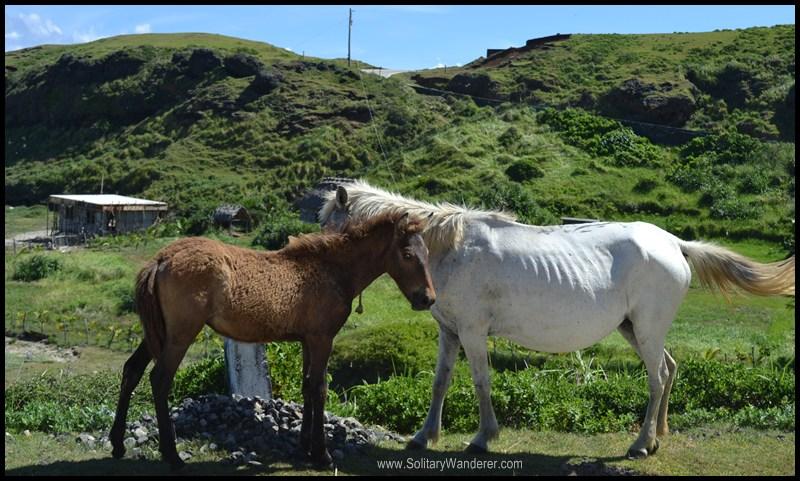 horses batanes