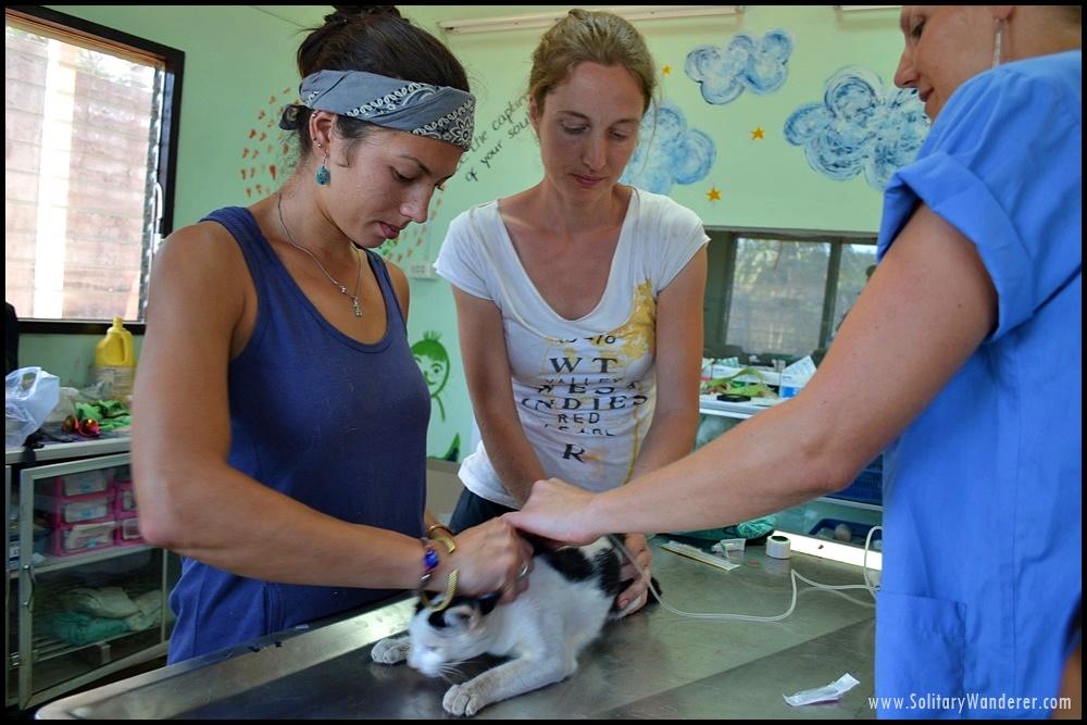 clinic animal sanctuary