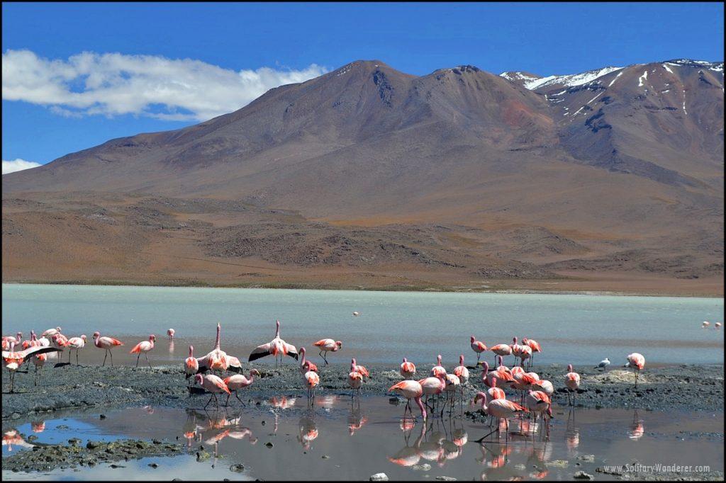 laguna-verde-bolivia-flamingoes