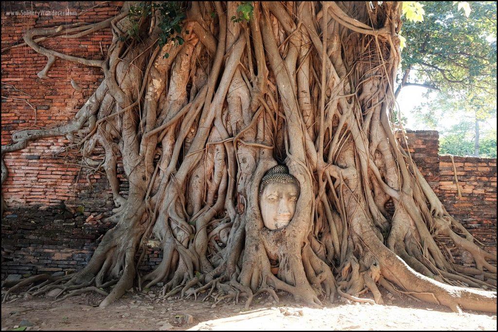 buddha head in tree ayutthaya thailand day trip