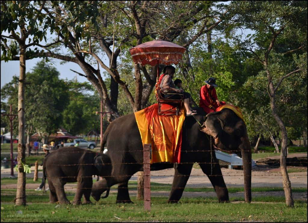 elephant ride ayutthaya thailand