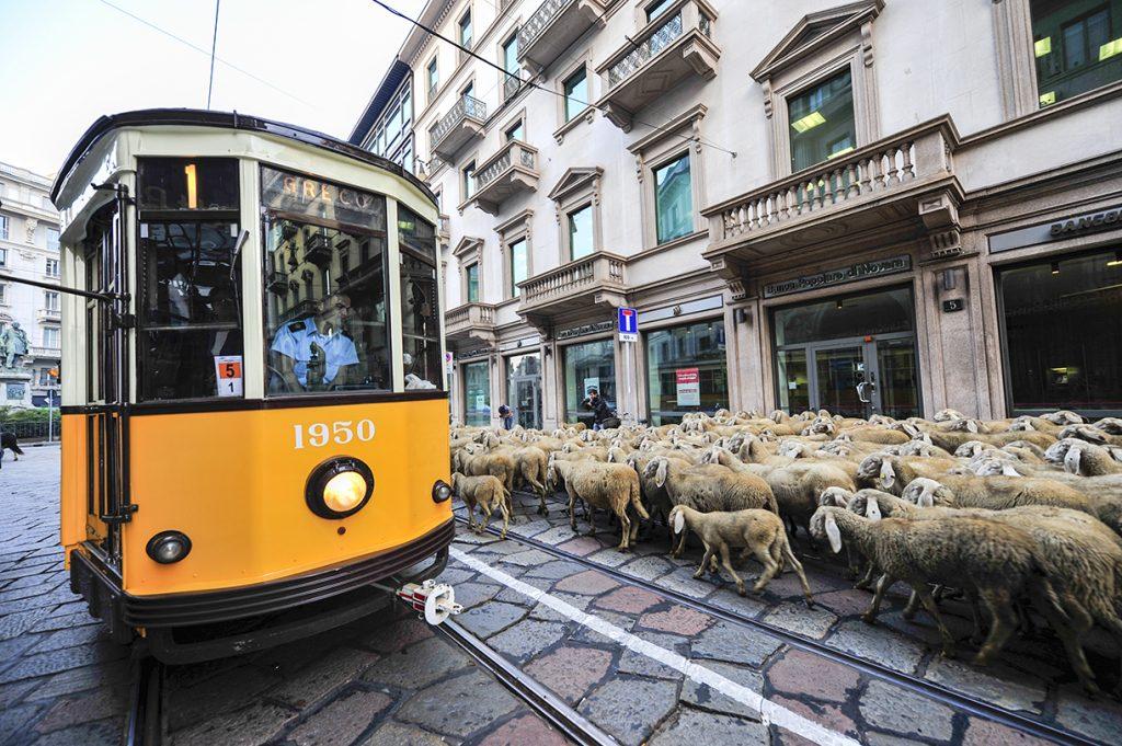milan italy tram