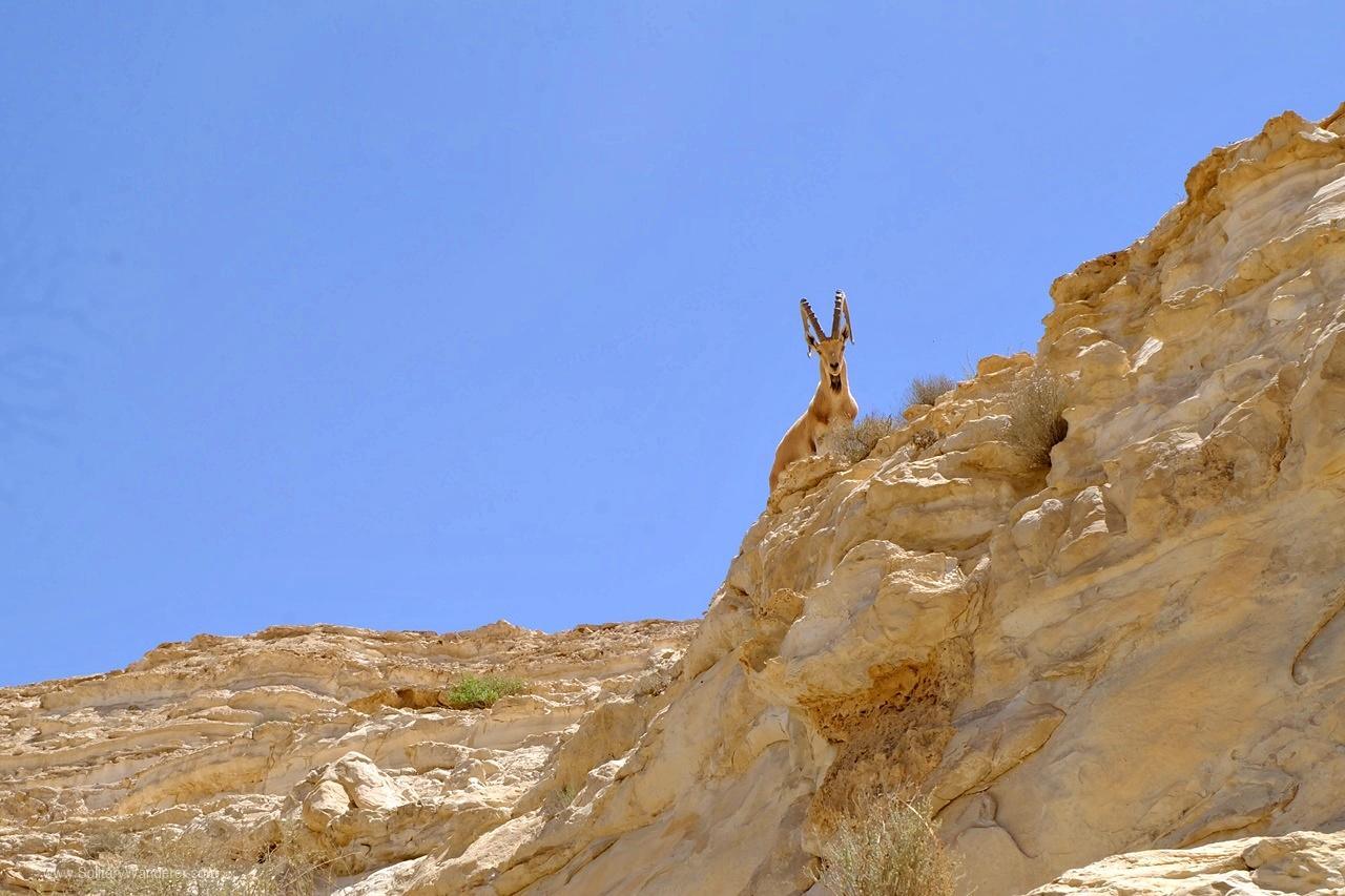 ibex israel
