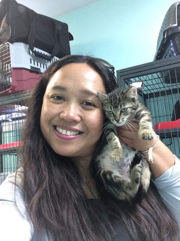 New Orleans rescue kitties solitarywanderer