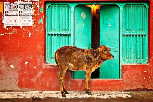Rishikesh Solo Travel Tips Solitary Wanderer