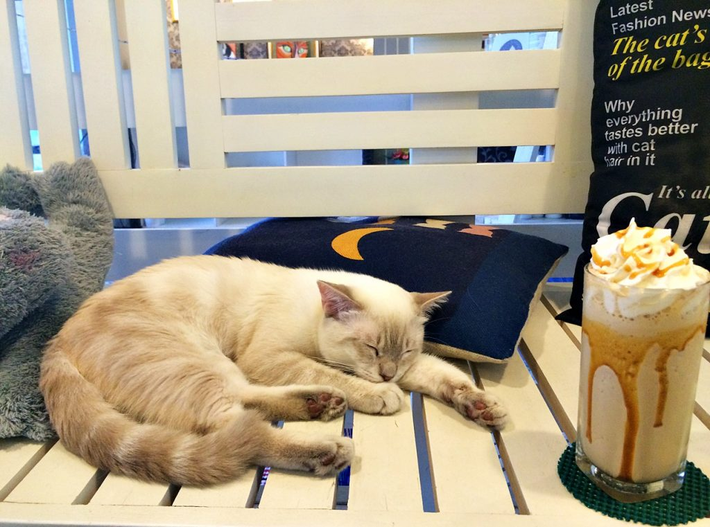 cat cafe manila solitarywanderer