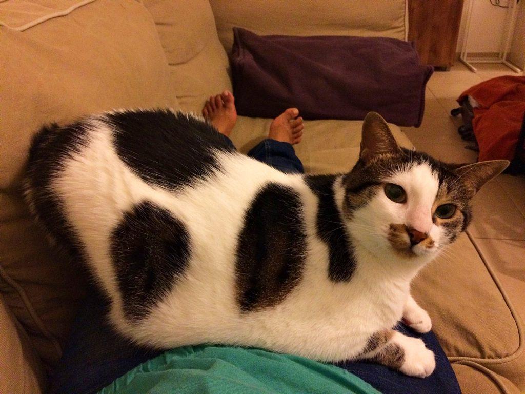 cat sitting suki in tel aviv solitarywanderer