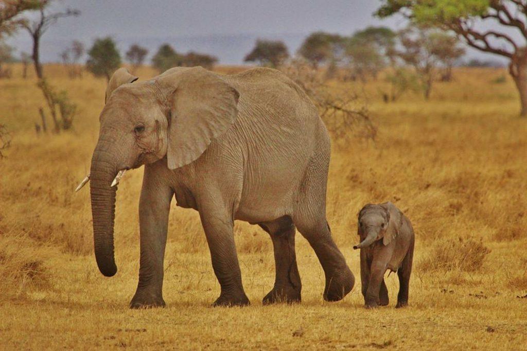 mariamichelle Tanzania elephants
