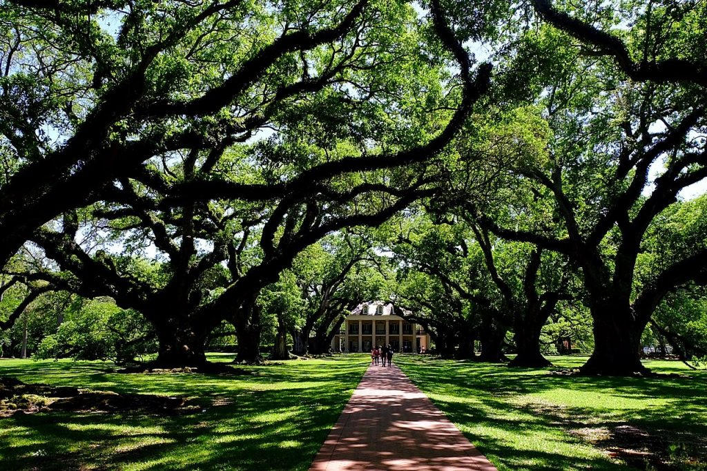 Things to do in new orleans oak alley plantation tour for Things not to miss in new orleans